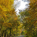 Tree Lined Park On A Fall Day by Deb Breton