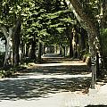 Tree Lined Promenade by William Crenshaw