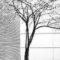 Tree Lines by Darryl Dalton