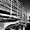 Tree Logger by WaLdEmAr BoRrErO