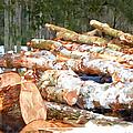 Tree Logs  by Jeelan Clark