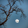 Tree Moon Gull by Jerry Gammon