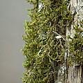 Tree Moss Closeup 2013 by Maria Urso