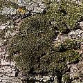 Tree Moss by Wayne Williams