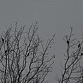 Tree Of Birds by Sonali Gangane