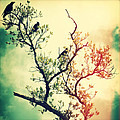 Tree Of Crows II Lights by Chris Andruskiewicz