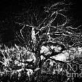 Tree Of Darkness by Chet B Simpson
