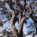 Tree Of Hope by Jamie Ramirez