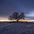 Tree Of Insanity by Aaron J Groen