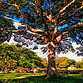Tree Of Joy. Mauritius by Jenny Rainbow