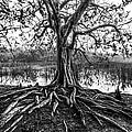 Tree Of Life by Debra and Dave Vanderlaan
