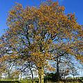 Tree Of Life by Gillian Singleton