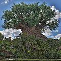 Tree Of Life by Jimmy McDonald