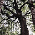 Tree Of Life by Teresa Ruiz