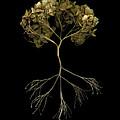 Tree Of Life by Tim Kravel