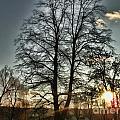 Tree Of Light by Nina Ficur Feenan
