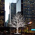 Tree Of Lights II by Nicky Jameson