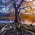 Tree Of Souls by Debra and Dave Vanderlaan