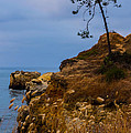 Tree On A Cliff II by Marco Oliveira