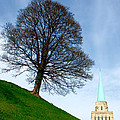 Tree On A Hill by Jeremy Hayden