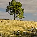 Tree On A Hill Vertical by David Head