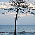 Tree On Beach by Linda Kerkau
