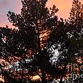 Tree On Fire by Jay Milo