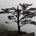 Tree On The Blue Ridge Parkway by Greg Reed