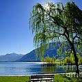 Tree On The Lakefront by Mats Silvan