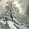 Tree On The Rocks by Horacio Prada