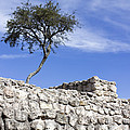 Tree On The Wall by Cathy Anderson