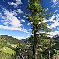 tree over Cordevole valley by Antonio Scarpi