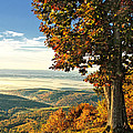 Tree Overlook Vista Landscape by Timothy Flanigan