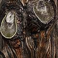 Tree Owl by Guy Shultz