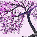tree Pink tree by Go Van Kampen