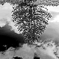 Tree Reflected  by Ken Frischkorn
