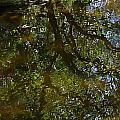 Tree Reflection by Denise Mazzocco