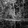 Tree Reflection In Chesapeake And Ohio Canal by Thomas Marchessault