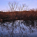 tree reflection on Wv pond by Chris Flees