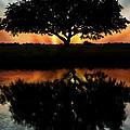 Tree Reflection by Regina  Williams