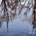 Tree Reflections I by Debbie Portwood