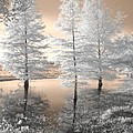 Tree Reflections by Jane Linders