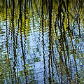 Tree Reflections On A Pond In West Michigan by Randall Nyhof