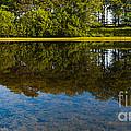 Tree Reflections by Svetlana Sewell