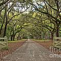 Tree Road by Brandon Hirt