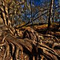 Tree Root by Wayne Kondoff
