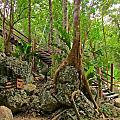 Tree Roots On Rock by John Malone