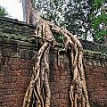 Tree Roots On Ruins At Angkor Wat by Sami Sarkis