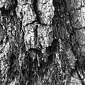Tree Rot by Aaron Swenson