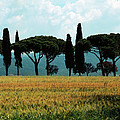 Tree Row In Tuscany by Heiko Koehrer-Wagner
